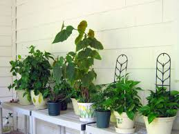 i now have 8 pothos plants and 6 of them are set up with a