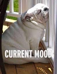 Tired Dog Meme - 20 tired meme tired tough times and meme