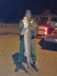 Michigan Dnr Lake Maps by Michigan Dnr Catch Sturgeon Poacher Out In Michigan