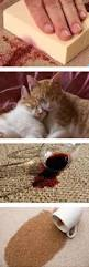 Wool Rug Cleaners 74 Best Cuci Karpet Images On Pinterest Cleaning Business