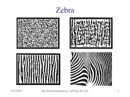 pattern formation zebra 5 21 20151 b pattern formation 5 21 20152 differentiation