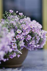 Plants That Do Not Need Much Sunlight by 12 Best Annual Flowers For Full Sun