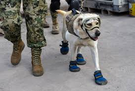 halloween in mexico city mexico city earthquake frida the rescue dog is saving lives