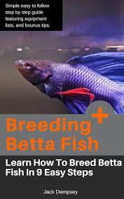 how to make fish tank decorations at home 12 of the best betta fish tanks you can buy in 2017