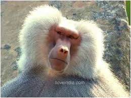 Baboon Meme - baboon meme generator