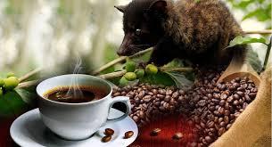 Luwak Coffee kopi luwak the world s most expensive coffee live trading news