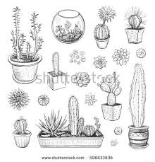 beautiful vector collection sketches houseplants hand stock vector