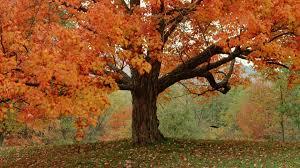 cute autumn backgrounds autumn iphone wallpaper