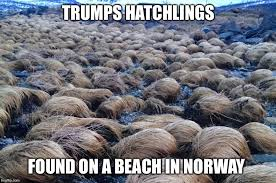 Norway Meme - trump army imgflip