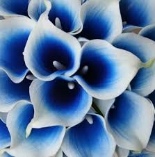 blue lilies purple and white calla wedding