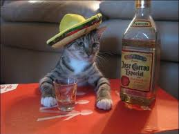 Tequila Meme - tequila cat cats know your meme