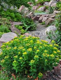 wonderful design for cushion spurge ideas will you please post