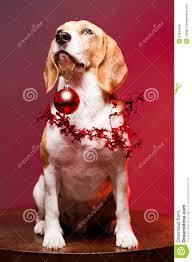 Christmas Dog Meme - cute funny christmas dog stock photo image of background 34939638