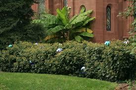 Cheap Gazing Balls Gazing Balls Garden Gardens And Landscapings Decoration