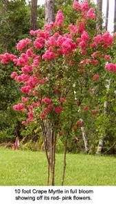 planting trees for landscaping memories color and wildlife