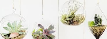 diy mini greenhouse swiish fashion beauty u0026 lifestyle