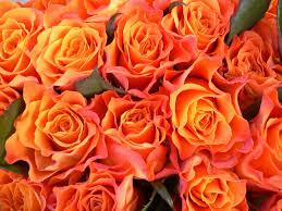 orange roses dozen colored roses flor