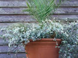Flowering Patio Plants Deadheading And Pruning Container Plants Hgtv