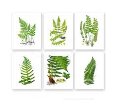 Fern Decor by Amazon Com Fern Wall Art Decor Set Of 4 Unframed Green Garden