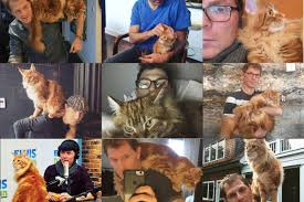 nobody loves cats more than bobby flay eater