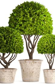 topiary trees potted 3d model cgtrader