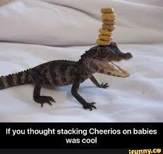 Alligator Memes - meme funny memes ifunny