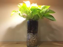Rock Vases Neon Pothos Live Made To Order In Layered Rock Clear Vases The