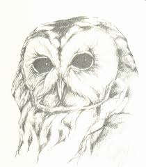tawny owl sketch by jpeckarts on deviantart