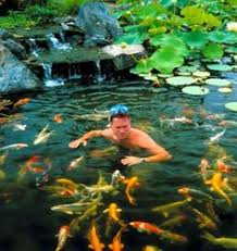 Backyard Fish Ponds by Koi Pond Close Up Home Ideas Pinterest Ponds Close Up And