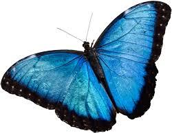 the butterfly place westford massachusetts an indoor garden