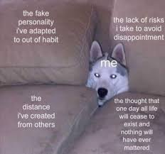 Siberian Husky Meme - so cozy funny memes daily lol pics