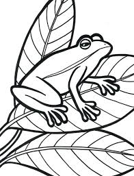 printable frog pattern free coloring pictures mask template pics