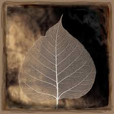 what does wood symbolize aspen leaf the aspen tree is symbolic of determination and
