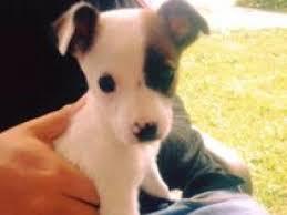 browse cute boy dog u0026 puppy names petmd