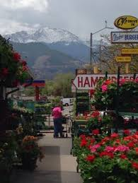 flower shops in colorado springs agia coffee shop in colorado springs vegan wrap and other