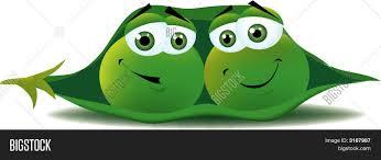 2 peas in a pod 2 peas pod vector photo bigstock