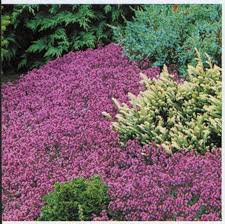 49 best perennial flowers images on pinterest flower gardening