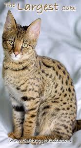 119 best cat facts u0026 fun images on pinterest cat site cat facts