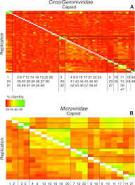 viral recombination blurs taxonomic lines examination of single