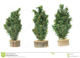 three miniature trees stock image image 35478841