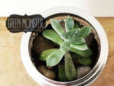 Desk Plant Live Aloe Plant For Your Desk Plant Size 2 By Greenmosterfarm