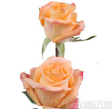 Peach Roses Fresh Cut Queensday Orange Peach Roses