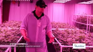 Led Grow Lights Cannabis Cannabis Led Grow Lights In Nevada Youtube