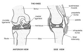 Anatomy Of Knee Injuries The Twisted Knee Total Health