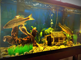 bass fishing home decor mission to catch a pet bass for my aquarium youtube