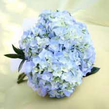bridesmaids bouquets beautiful blue hydrangea bridesmaids bouquets global