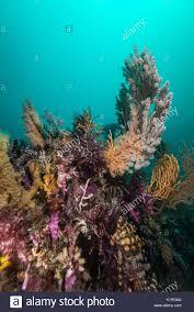 colorful flower gardens colorful flower garden at under the sea depth 18m stock photo