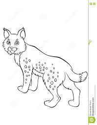 coloring pages animals little cute lynx stock vector image
