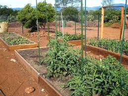 building a vegetable garden box garden boxes in build vegetable