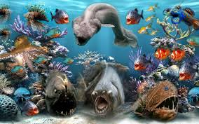 sea animals pictures wallpapers 53 wallpapers u2013 adorable wallpapers